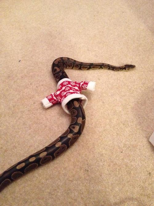 snake in a sweater