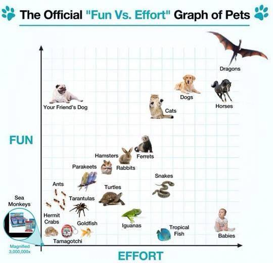 fun vs effort graph of pets